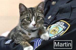 Martin NYPD 60th Precinct Dept Cat