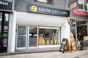 Meow Cat Café in Toronto