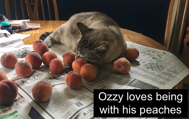 Ozzy and his favorite fruit. No, his favorite object.