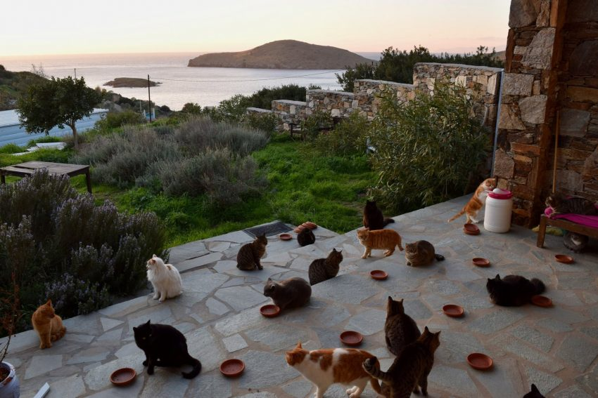 Paid job looking after cats on small Greek island
