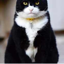 Palmerston the Foreign Office cat