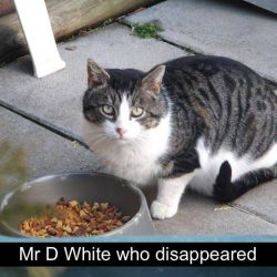 RIP Mr. D White - Another victim of the trap and destroy and trap and dump efforts by the evil people of lot 7 and the heartless park owners
