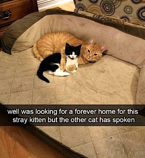 Well, I was looking for a forever home for this stray kitten but the other cat has spoken