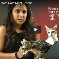 Hatred of cats starts with fear of cats