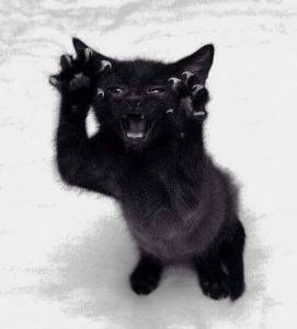 Agressive black cat