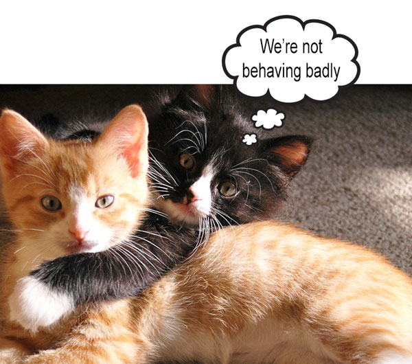 Bad cat behavior. What does it mean?