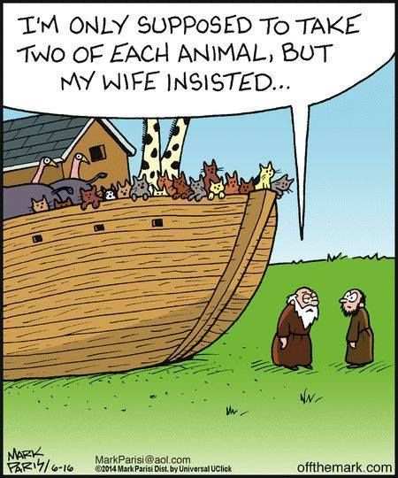 Cat cartoon featuring Noah's Ark