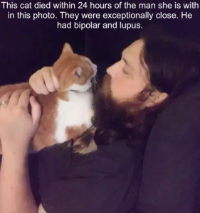 Cat died within 24 hours of man she loved
