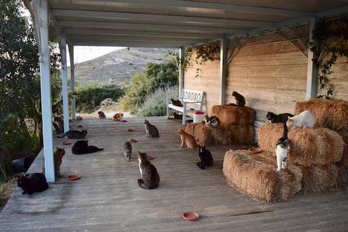 Job offer running cat rescue on Greek island Syros