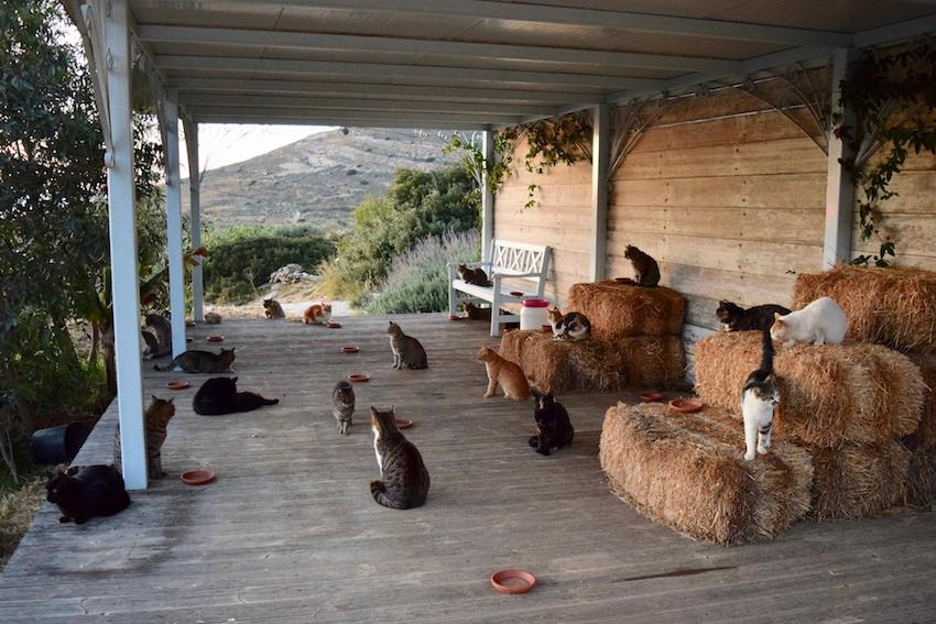 Cat job in Greece