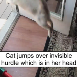Cat jumps over invisible hurdle which is in her head