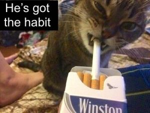 Cat passive smoking is bad for a cat's health