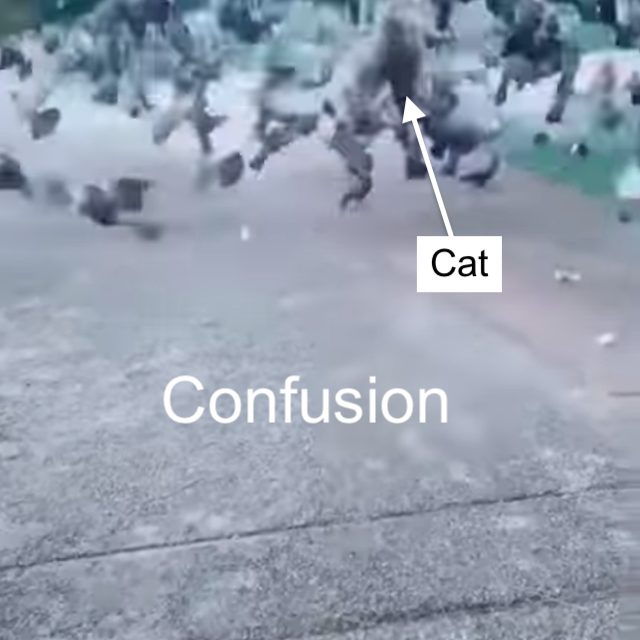 Cat predation confusion