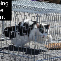 Cat trapping law