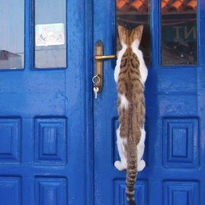 Picture of cat at a front door