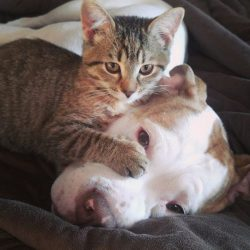 Dog loves cat and vice versa