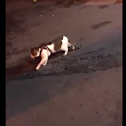 dog stops cat friend from getting into a fight