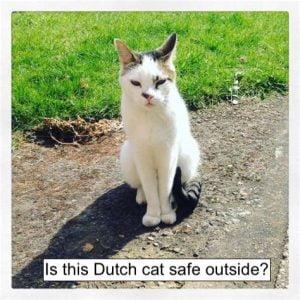 Dutch cat