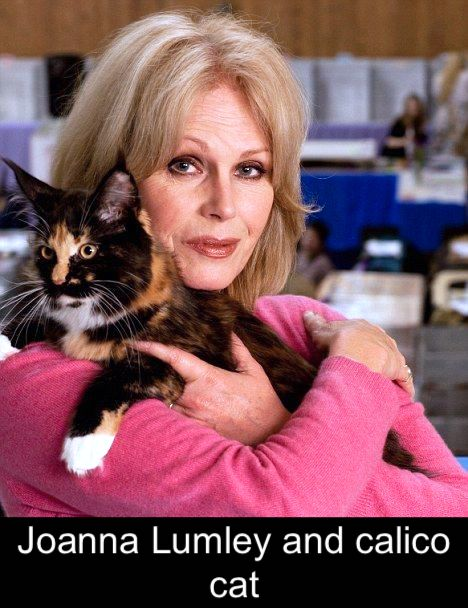 Joanna Lumley and calico cat