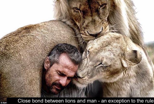 Man's close bond with lions