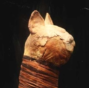 mummified cat ancient egypt