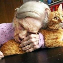 Photographs of old ladies and their cats