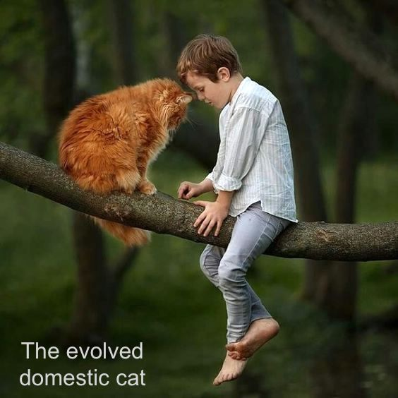 The evolved domestic cat