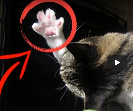 Weird cat behaviors explained