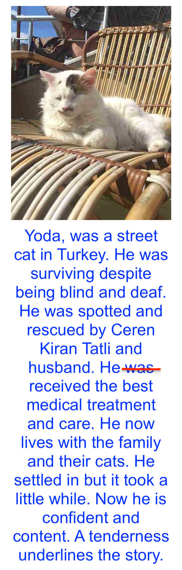 Yoda a former street cat is blind and deaf