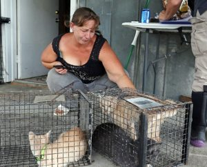 Tammie with some of the rescued cats. Photo courtest Casey Mozingo