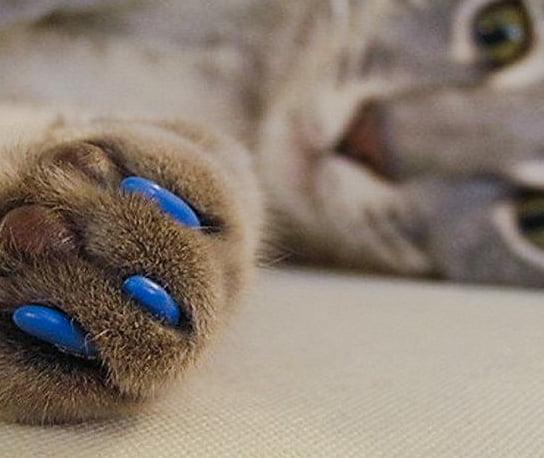 Cat claw caps