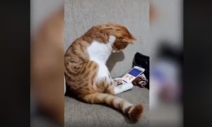 Cat nuzzles image of deceased owner