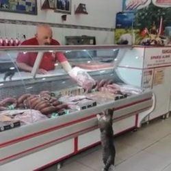 Community cat customer fed at deli