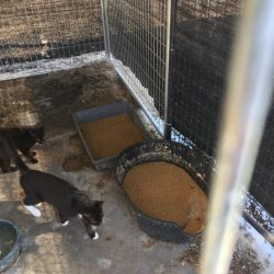 Pictures of Marion County Animal Shelter
