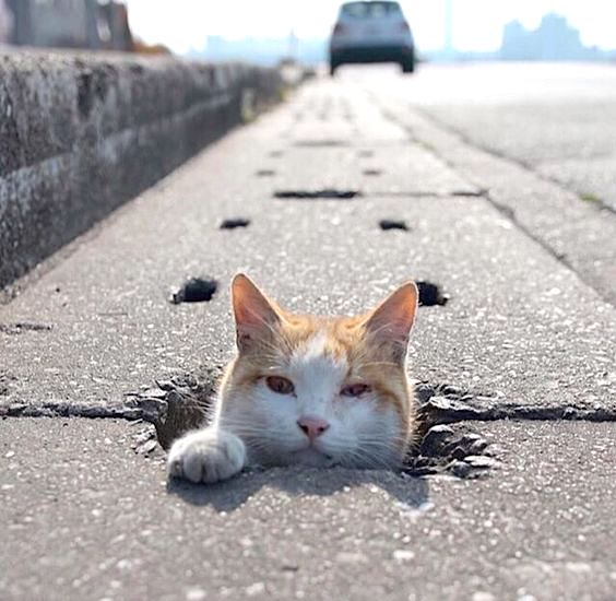 Picture of cat popping head out of roadside drain
