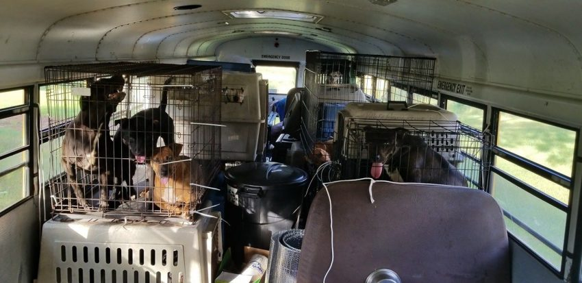 School bus rammed with cats and dogs in carriers during Hurricane Florence