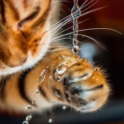Picture of water resistant cat fur