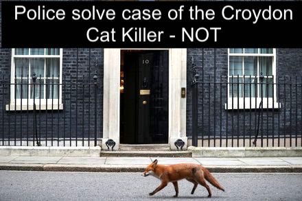 Police solve case of Croydon cat killer NO
