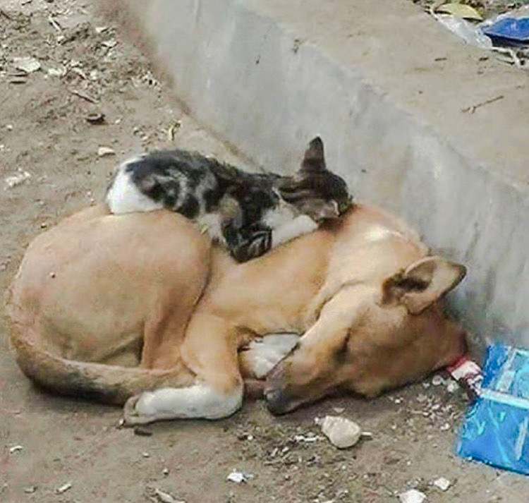 Heartrending picture of street cat and dog