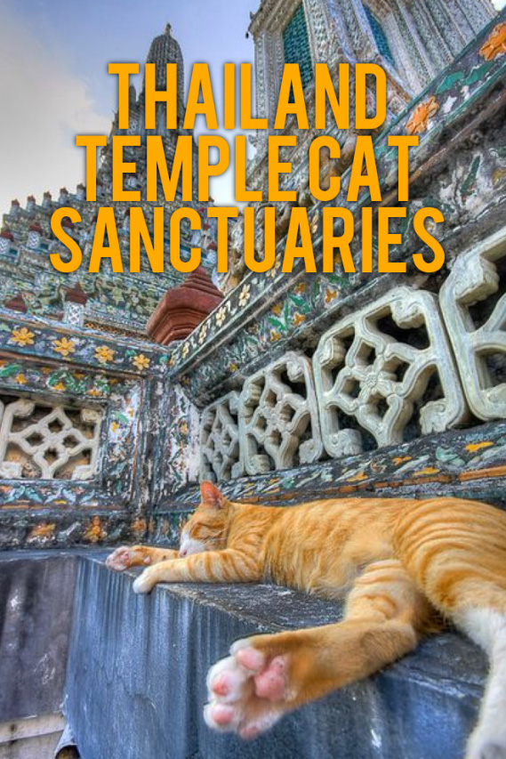 Thailand temple cat sanctuaries