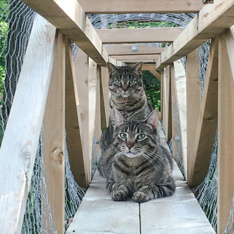The cats who enjoy a wonderful outdoor tree house and climber