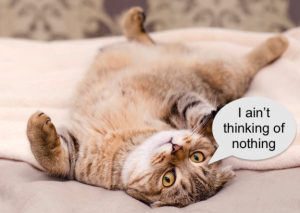 Thinking domestic cat