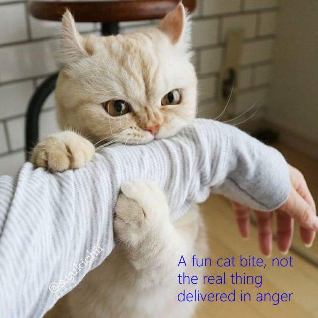 A fun cat bite