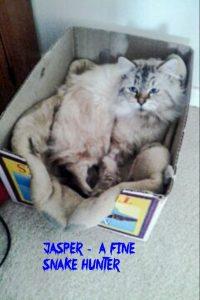Jasper hunts snakes and kills them