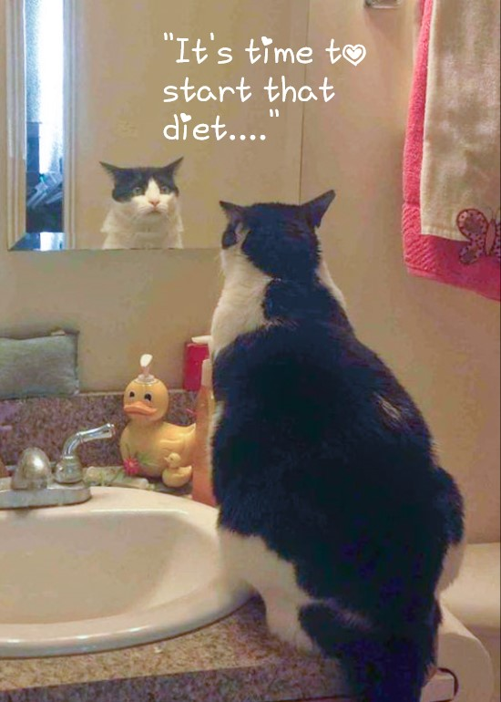 Picture of fat cat looking in a mirror