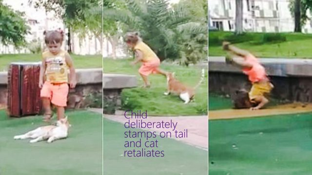 Child stamps on cat's tail