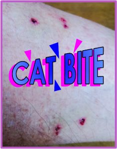 Vampire cat bite