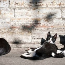 Feral cats - a family