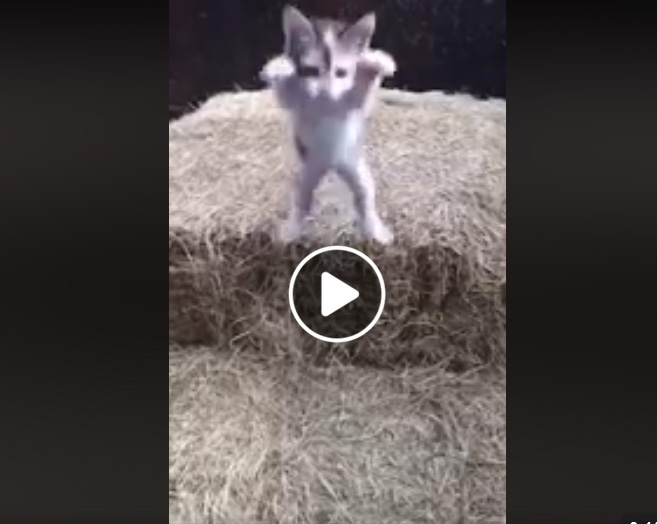 Kitten failed leap