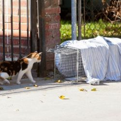 Trapping feral cats